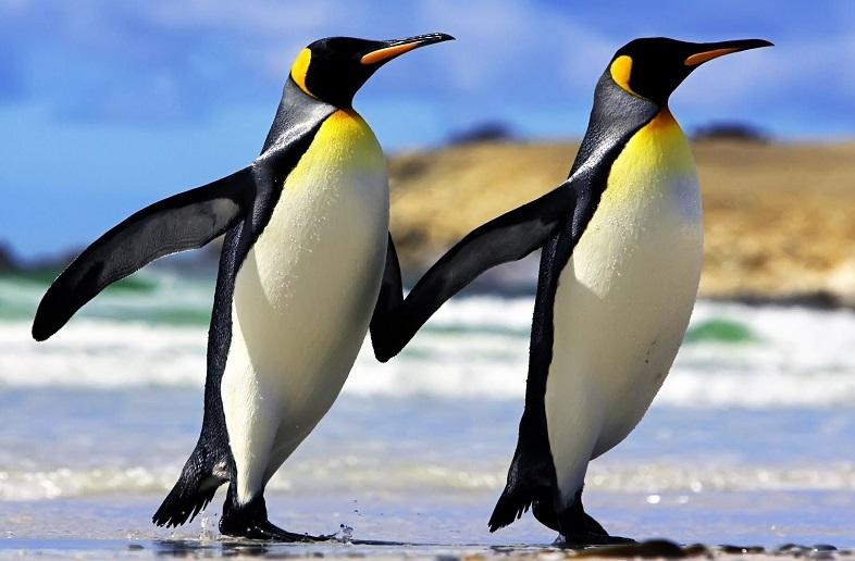 pink penguins